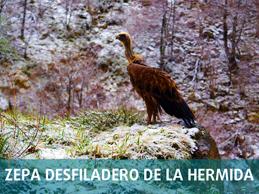 Zepa Del Desfiladero De La Hermida